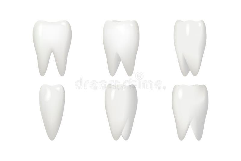 Isolato sull'animazione bianca della radice di dente di rotazione incornicia la stomatologia che realistica 3d i denti dentari si illustrazione vettoriale