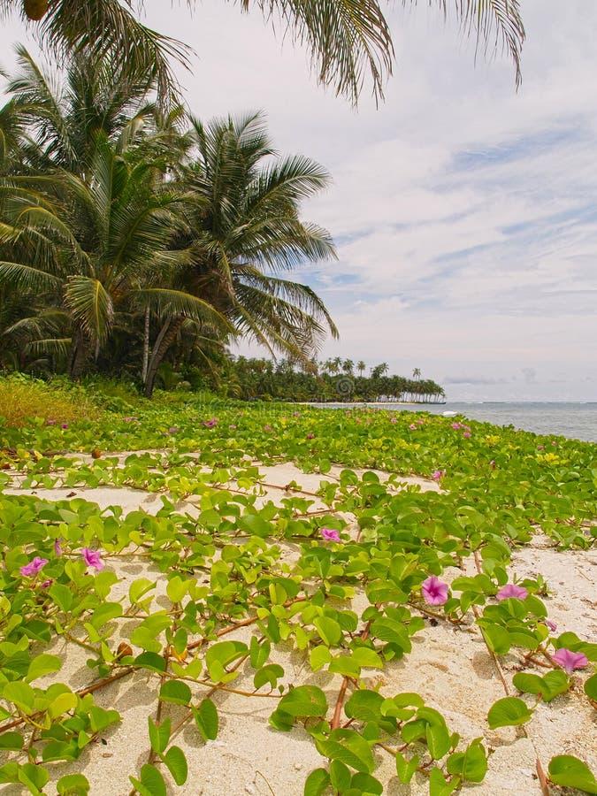 Isole del San Blas immagini stock