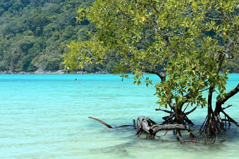 Isole di Surin fotografia stock