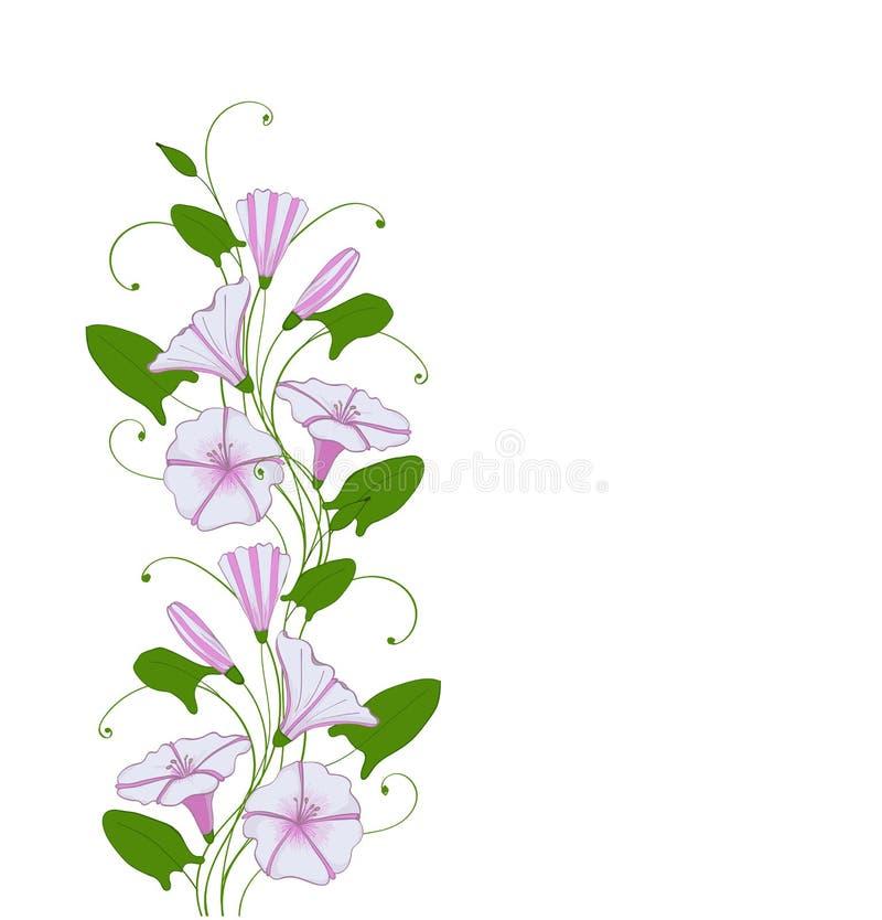 Isoleer element voor de winde van de ontwerpbloem, bloemengrens met ochtendglorie Winde teder patroon royalty-vrije illustratie