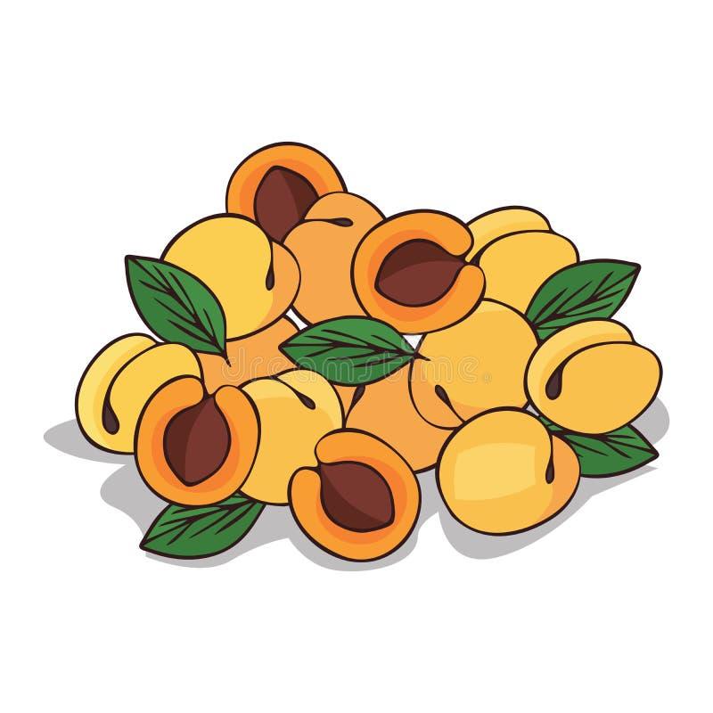 Isoleer rijp abrikozenfruit stock illustratie