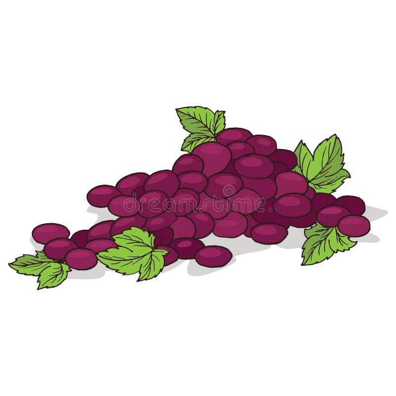 Isoleer rijp druivenfruit royalty-vrije illustratie