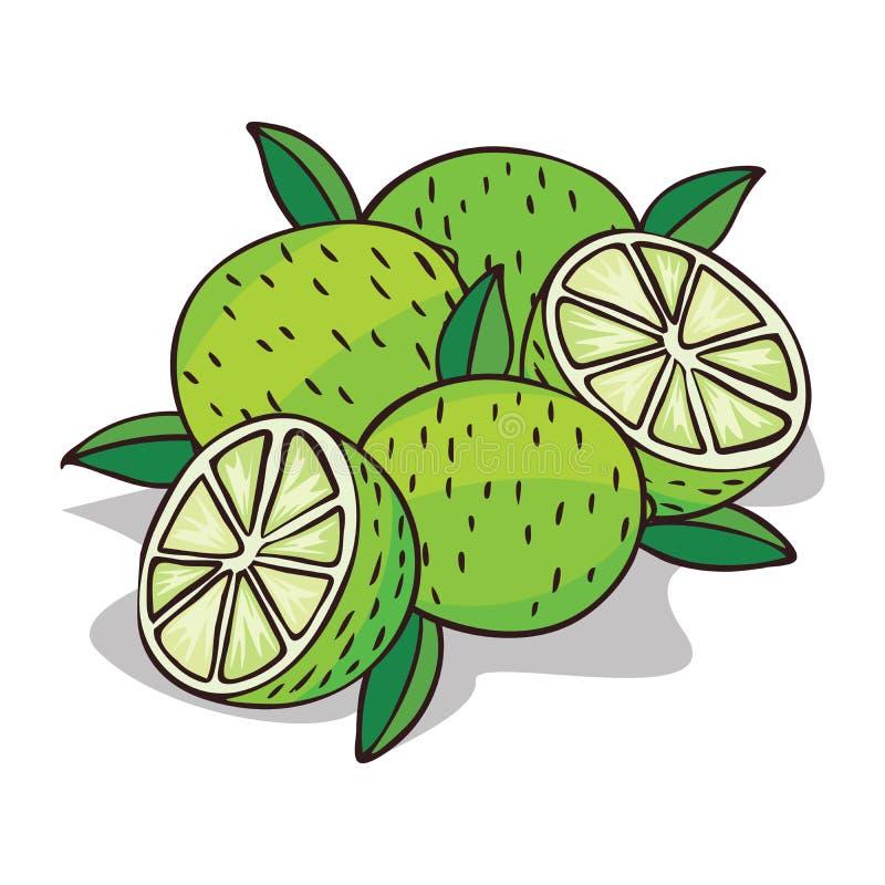 Isoleer rijp kalkfruit vector illustratie