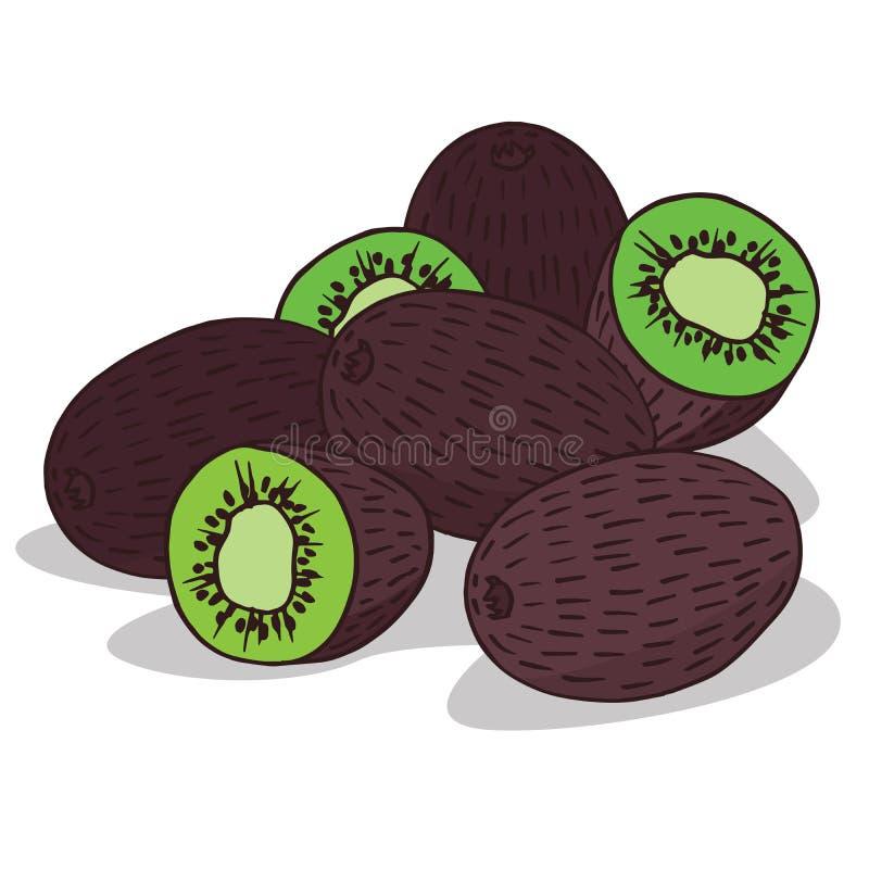 Isoleer rijp kiwifruit vector illustratie