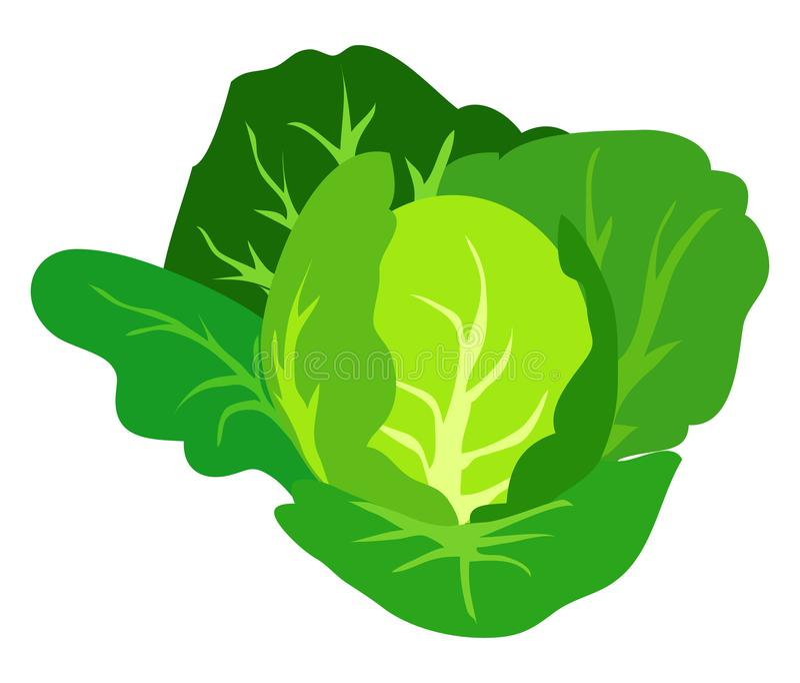 Isoleerde de groene Kool Vectorillustratie Wit royalty-vrije illustratie
