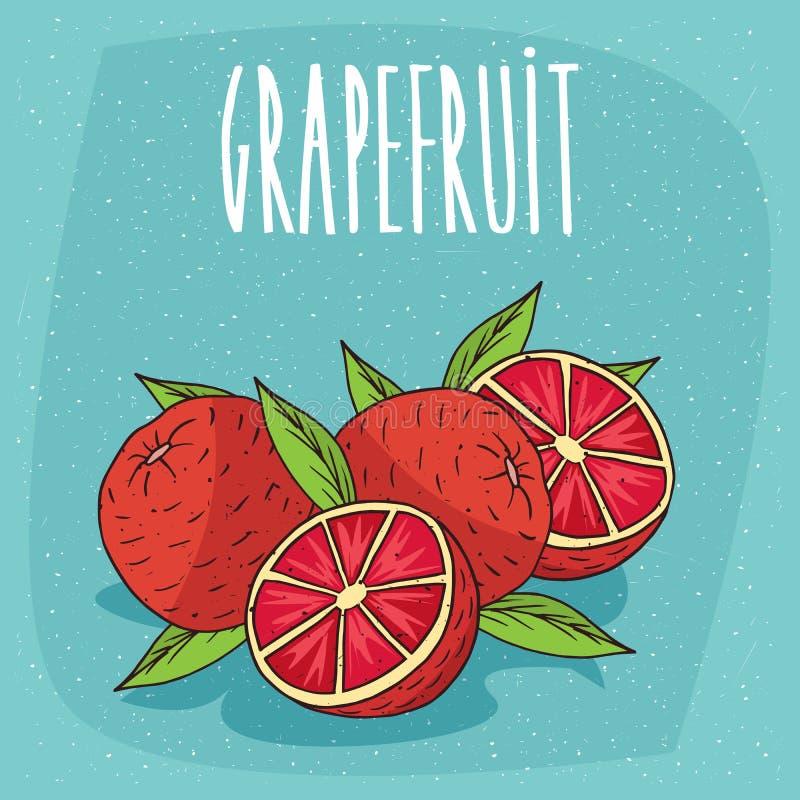 Isoleerde verscheidene rijpe grapefruitvruchten stock illustratie
