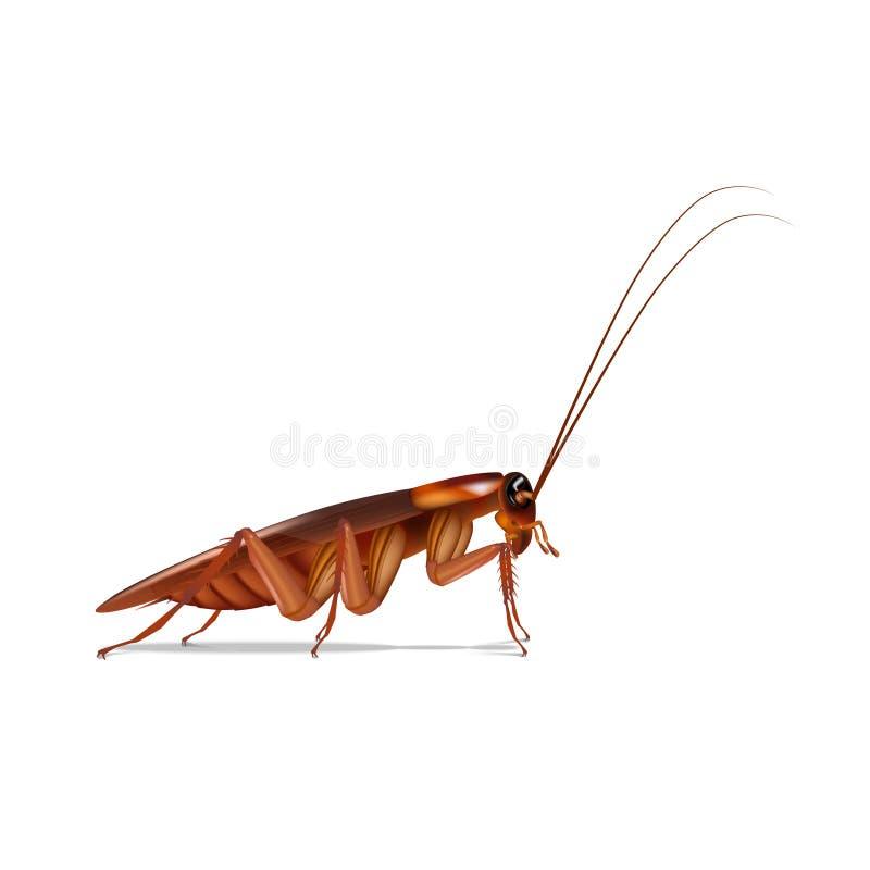 Isoleert de kakkerlakken zijvector op witte achtergrond stock illustratie