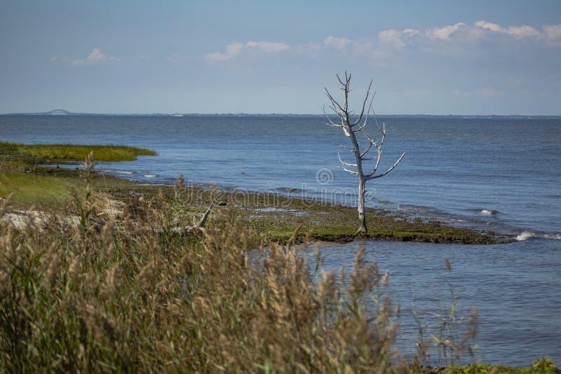 Isolement d'érosion des plages - correction photo stock