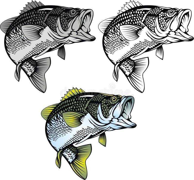 Isolerad bas- fisk stock illustrationer