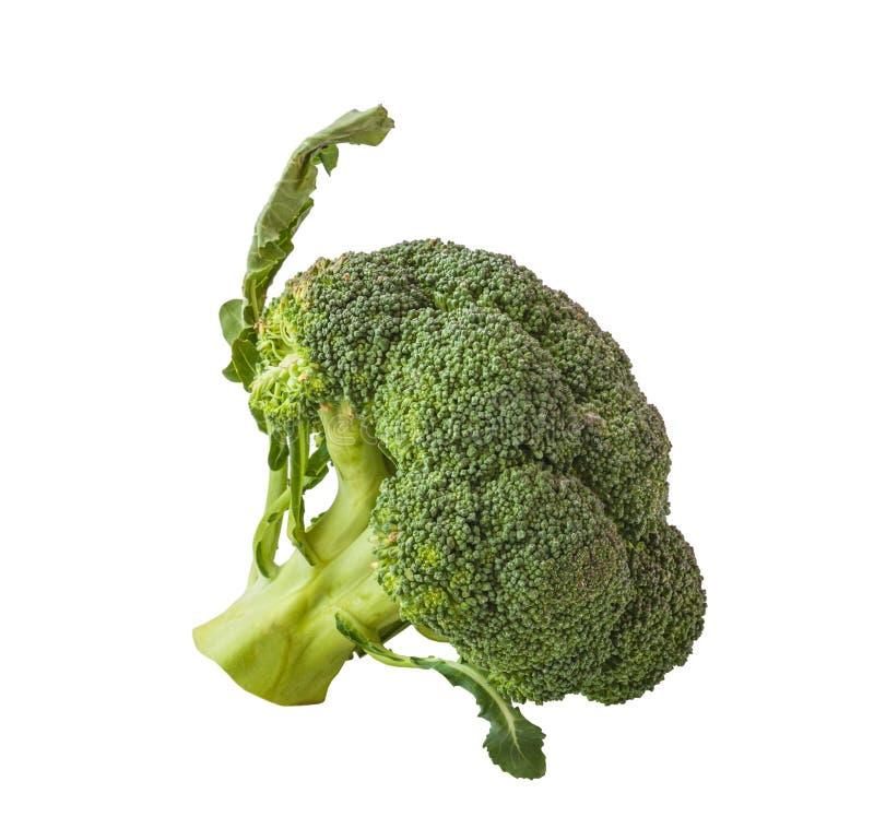 isolerad broccoli fotografering för bildbyråer