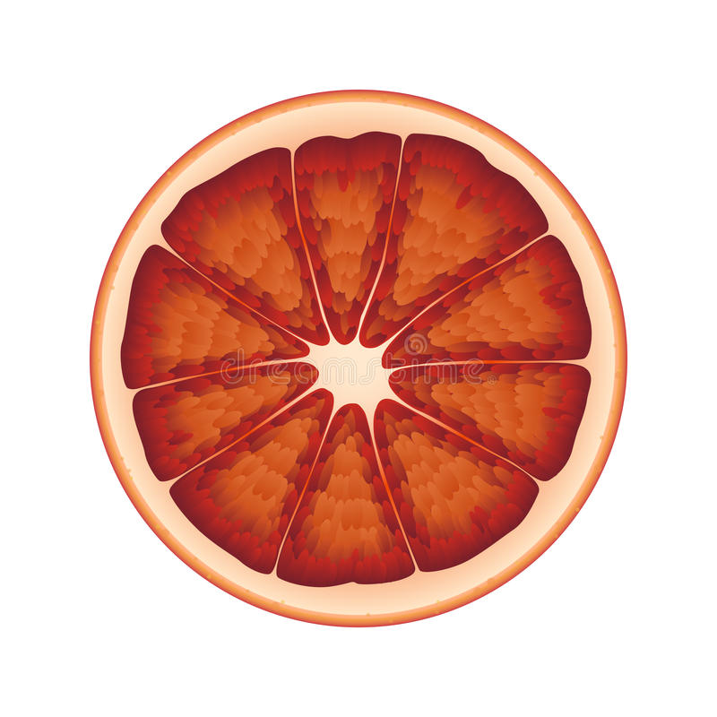 Isolerad cirkel av den saftiga blodiga apelsinen för röd färg på vit bakgrund Realistisk kulör rund skiva stock illustrationer