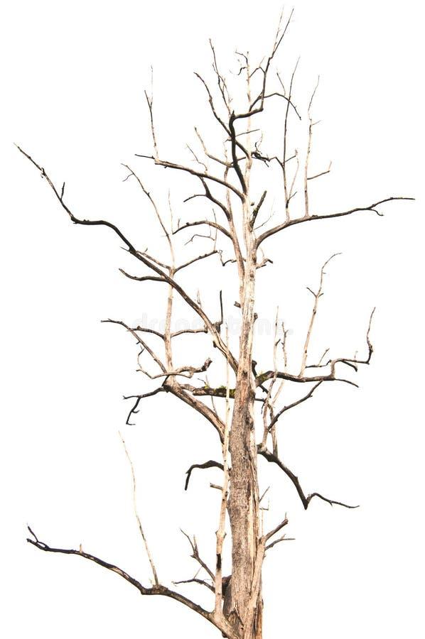 Download Isolerad död tree. fotografering för bildbyråer. Bild av avlövat - 27280353