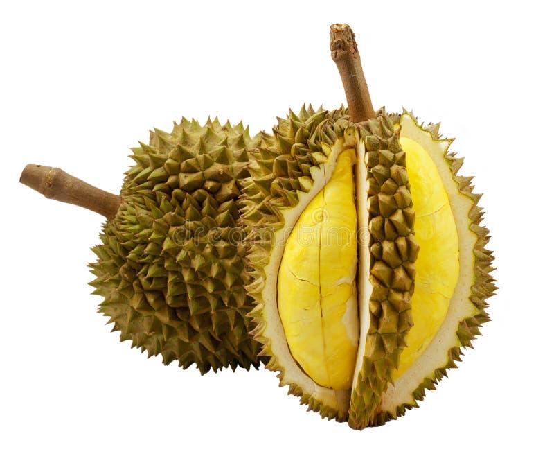 isolerad durian arkivbilder