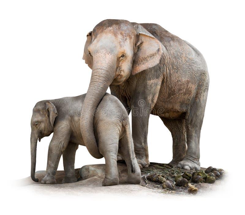 Isolerad elefantfamilj royaltyfri fotografi
