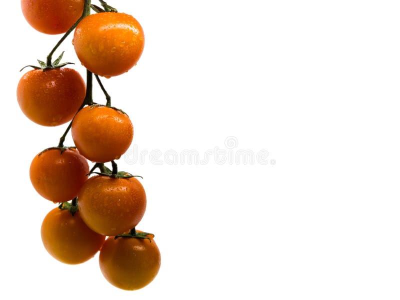 Isolerad filial av körsbärsröda tomater på vit bakgrund med utrymme för text royaltyfria bilder
