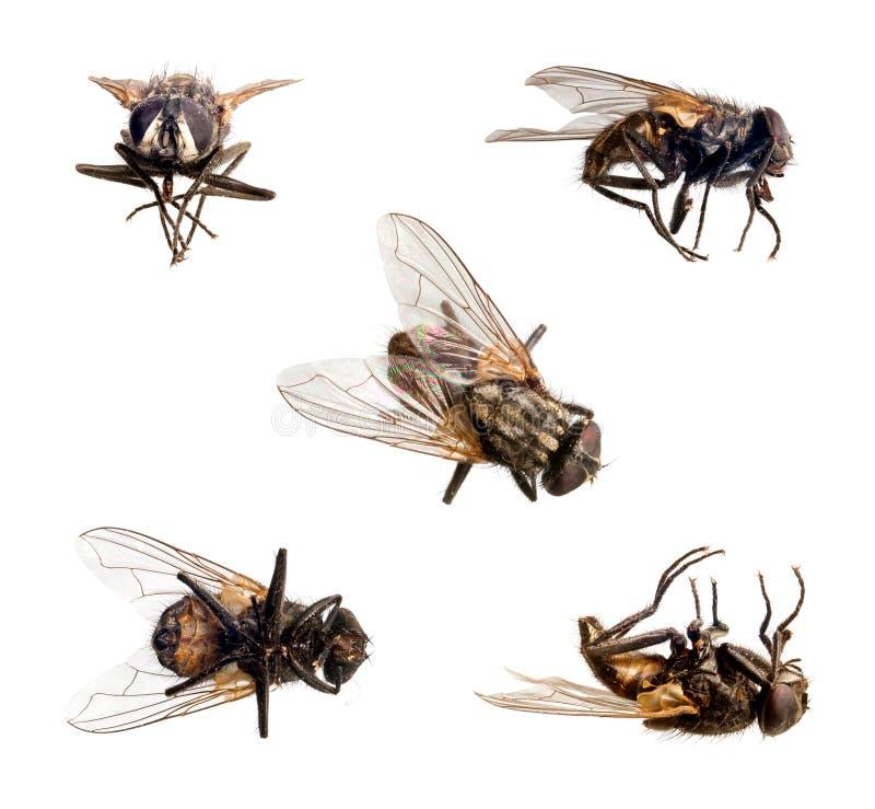 Isolerad fluga arkivfoto