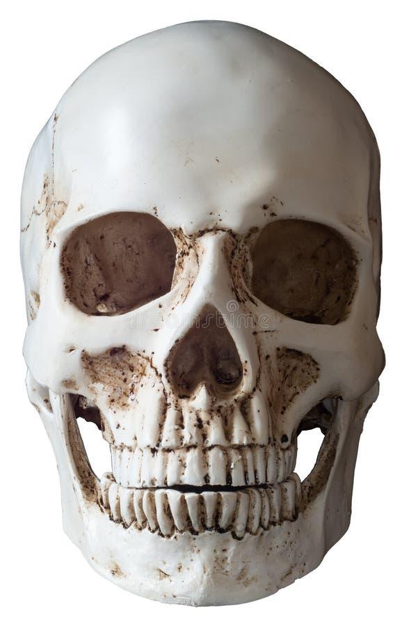 Isolerad Frontal sikt för mänsklig skalle arkivbilder