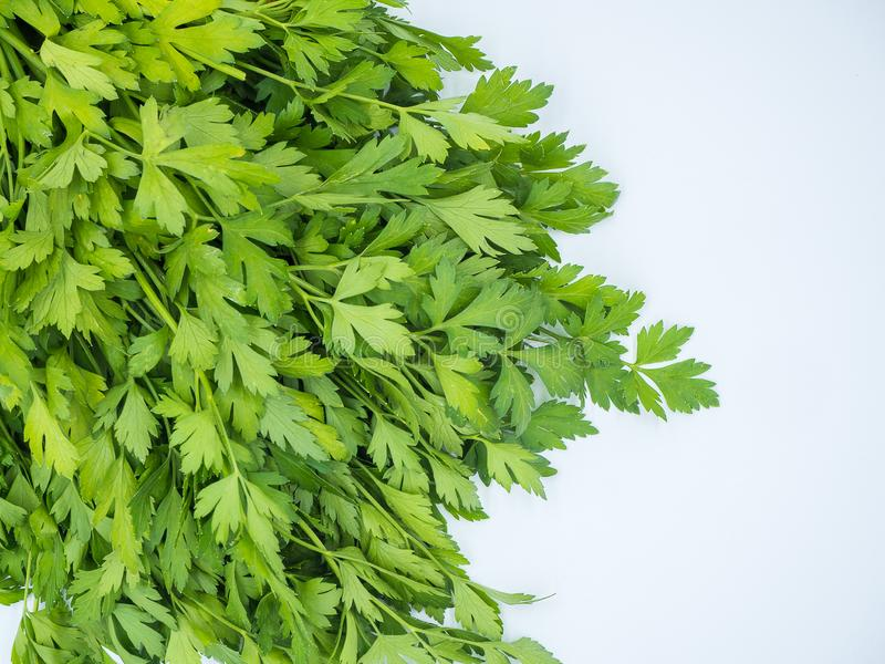 Isolerad grupp av ny parsley royaltyfri fotografi