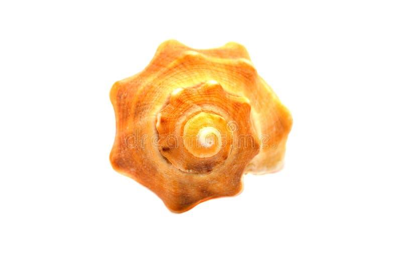 Isolerad havsskaldjur arkivfoto