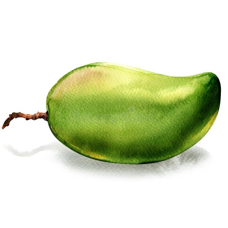Isolerad hel frukt för ny grön mango, vattenfärgillustration på vit royaltyfri illustrationer