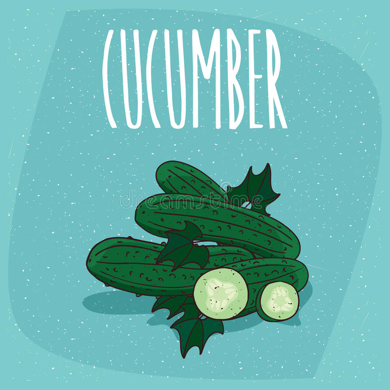Isolerad hel fruktgurkagrönsak och snitt vektor illustrationer