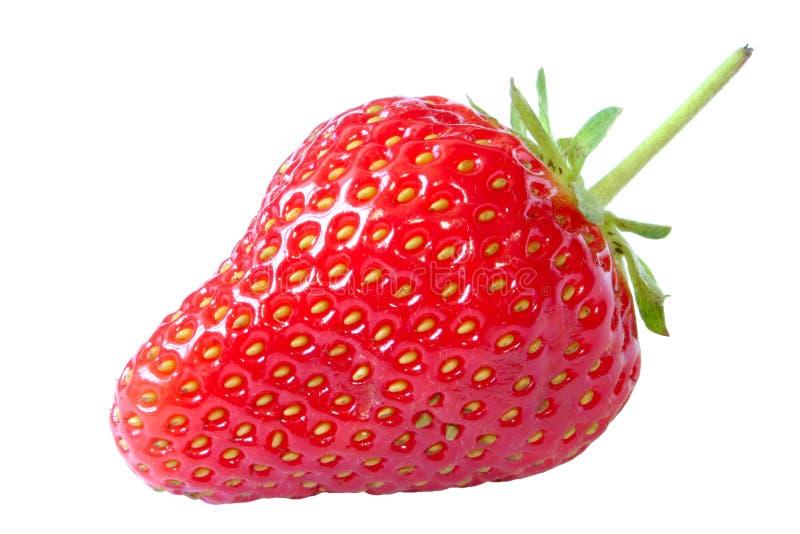 isolerad jordgubbe royaltyfria foton
