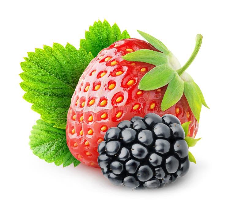 Isolerad jordgubbe och björnbär royaltyfria foton