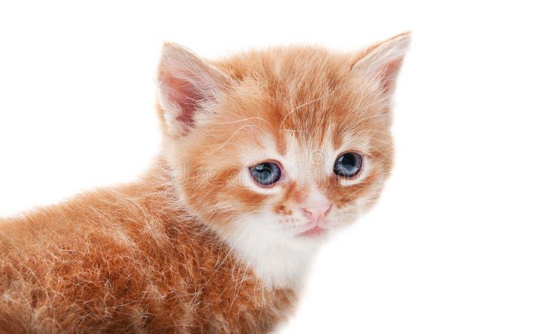 isolerad kattingefära arkivbilder