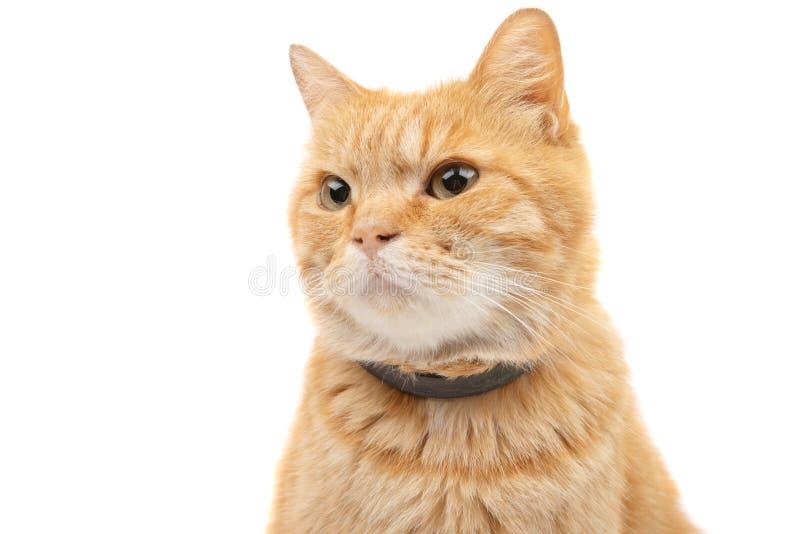 isolerad kattingef?ra fotografering för bildbyråer