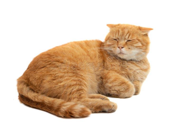 isolerad kattingef?ra arkivfoton