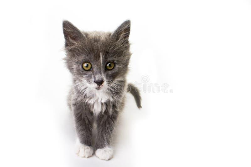 isolerad kattunge arkivfoto