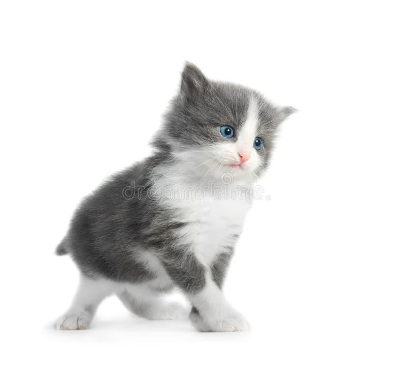isolerad kattunge fotografering för bildbyråer