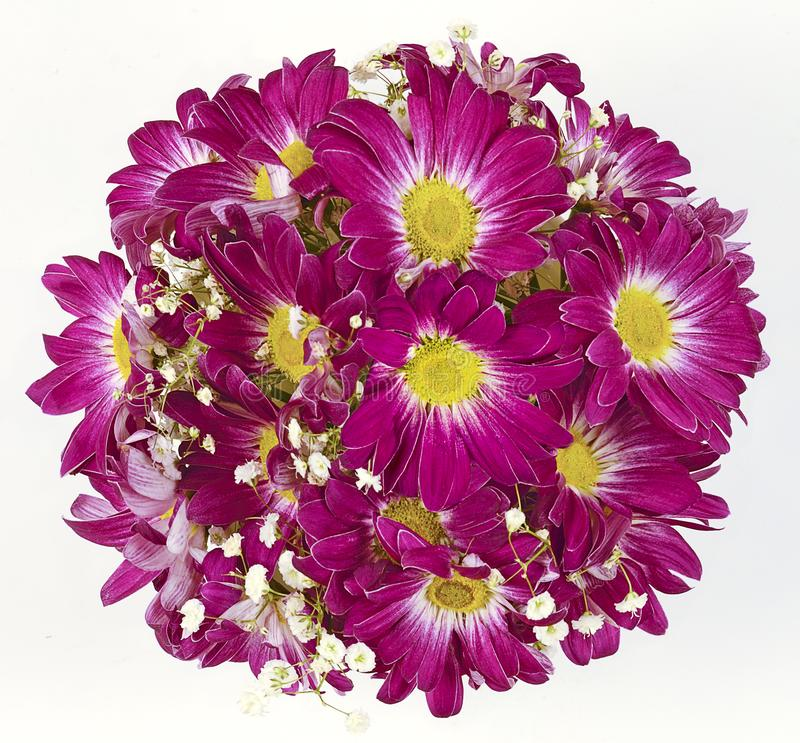 Isolerad krysantemumrunda arkivfoto