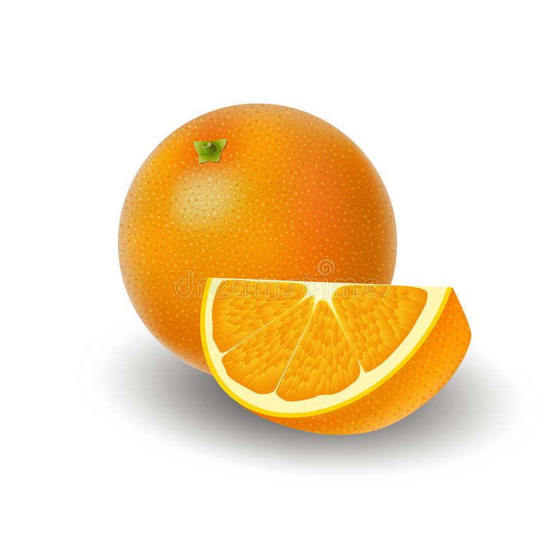 Isolerad kulör grupp av apelsin, skiva och hel saftig frukt med skugga på vit bakgrund Realistisk citrus royaltyfri illustrationer