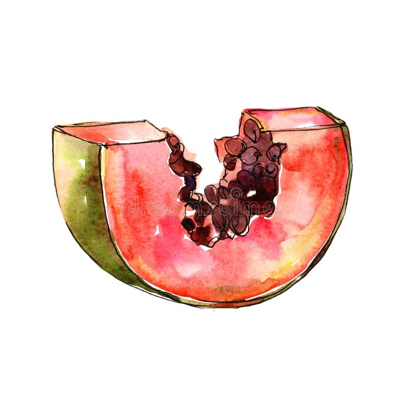 Isolerad lös frukt för exotisk papaya i en vattenfärgstil stock illustrationer