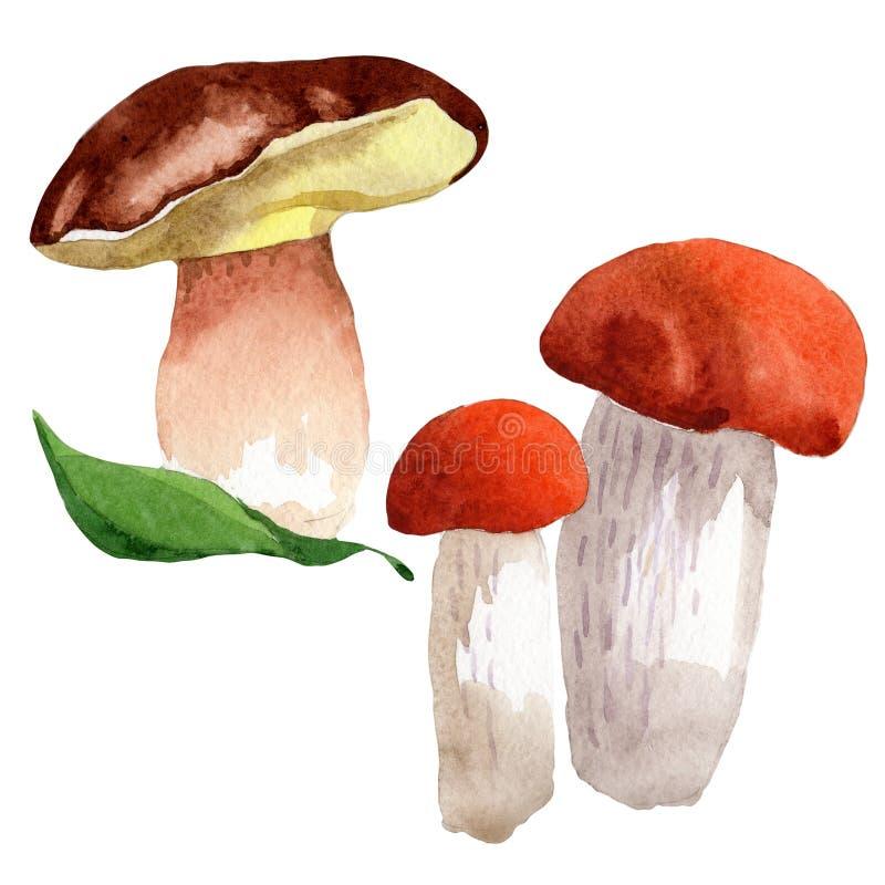 Isolerad lös grönsak för champinjoner i en vattenfärgstil stock illustrationer