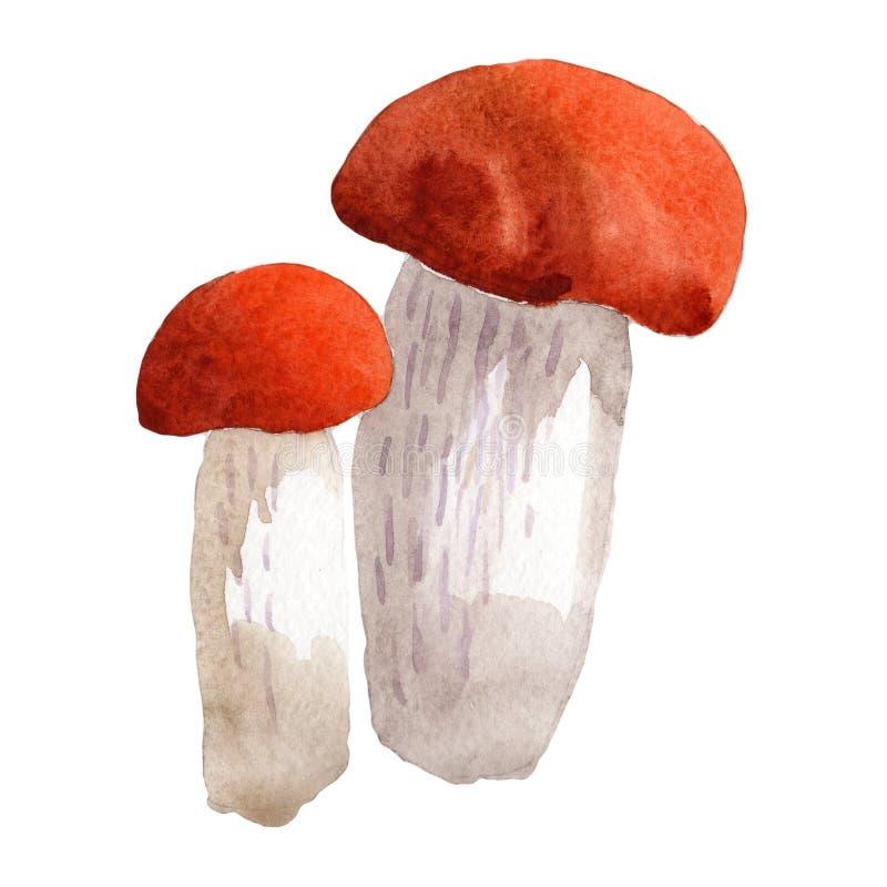 Isolerad lös grönsak för champinjoner i en vattenfärgstil royaltyfri illustrationer
