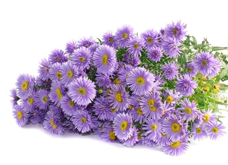 isolerad lila för bukett blommor arkivbilder