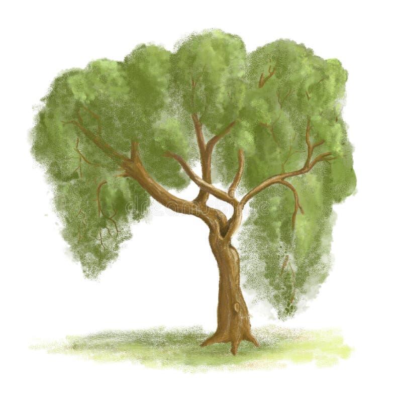 isolerad målad treepil vektor illustrationer