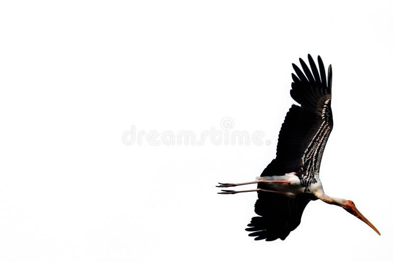 Isolerad m?lad stork vektor illustrationer