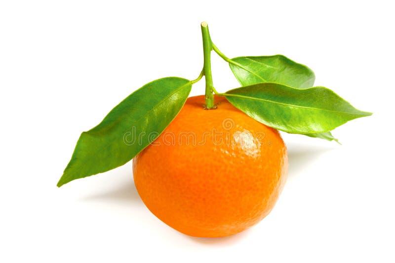 isolerad mandarin royaltyfria foton