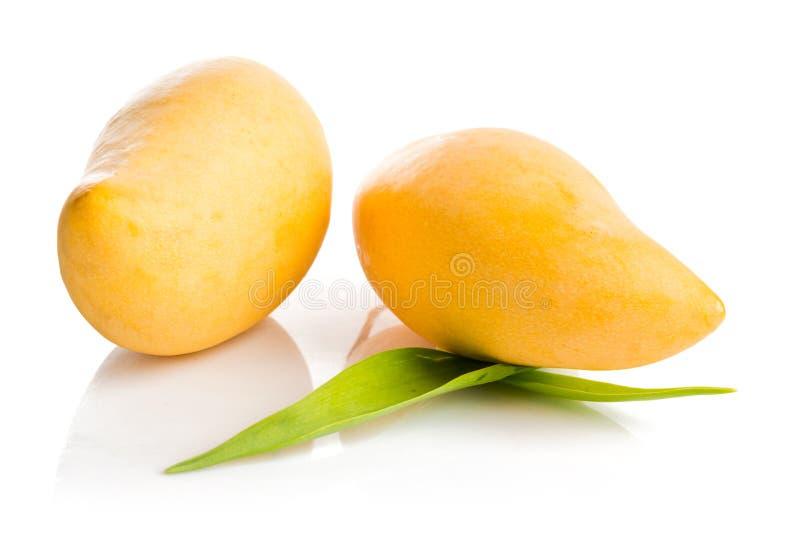 Isolerad mangofrukt royaltyfri foto