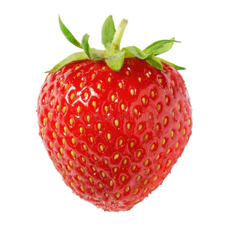 isolerad mogen jordgubbe royaltyfria bilder