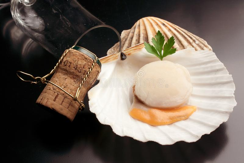 Isolerad ny rå kammussla - skaldjur royaltyfria foton