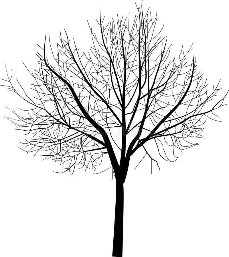 Isolerad oisolerad treeillustration royaltyfri illustrationer