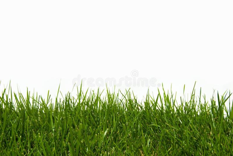 isolerad organisk white för gräs green royaltyfri foto
