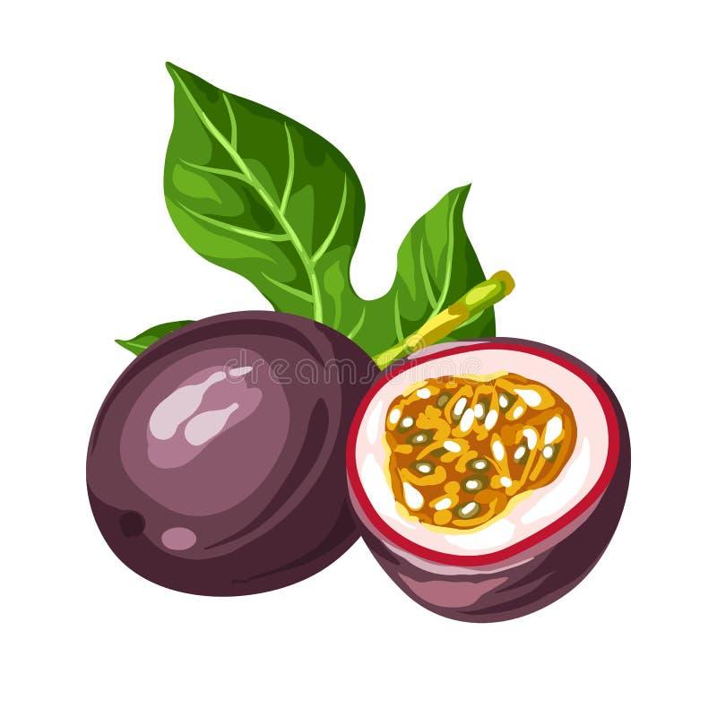 isolerad passionwhite för bakgrund frukt Illustration av den tropiska växten stock illustrationer