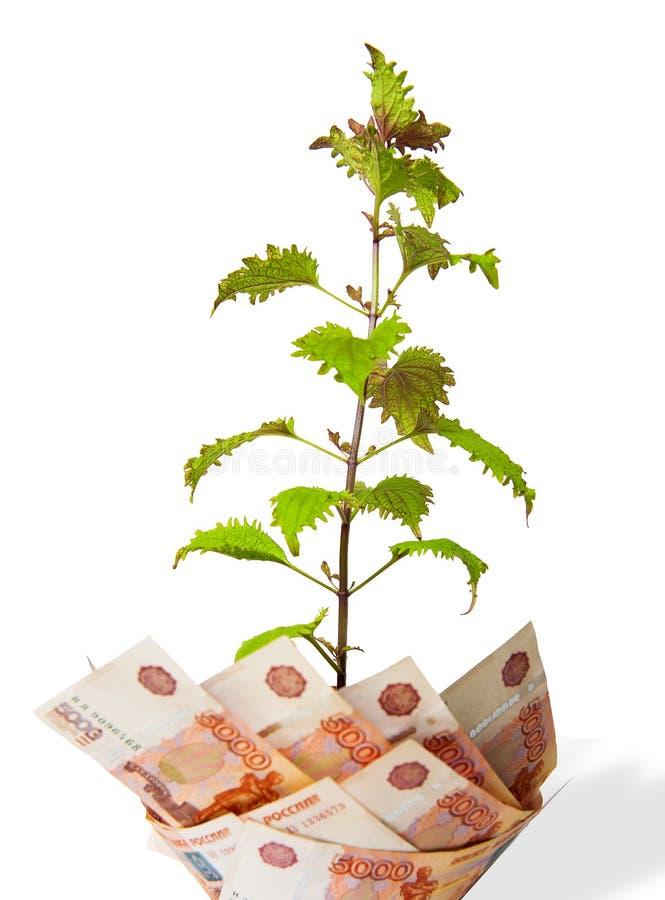 isolerad pengartreewhite Bush växer från pengar olika pengar för länder royaltyfria foton