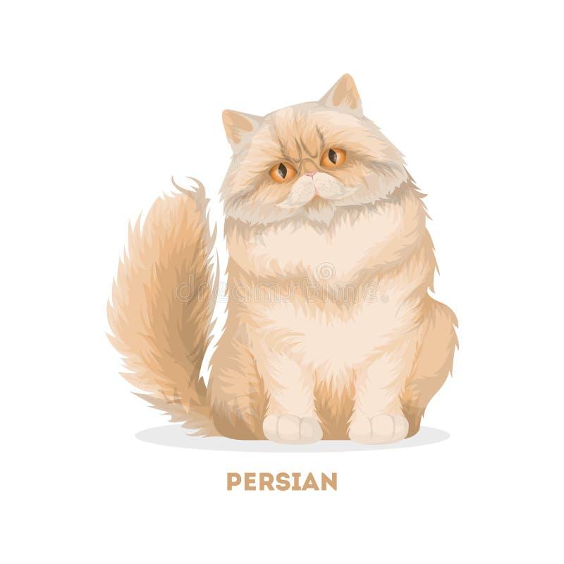 Isolerad persisk katt stock illustrationer
