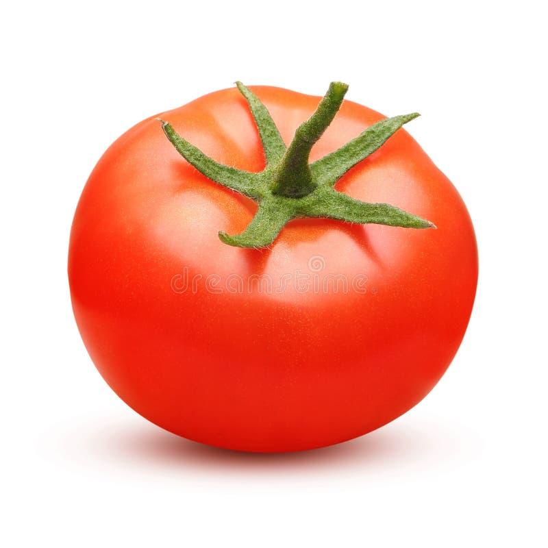 isolerad röd tomat royaltyfri fotografi